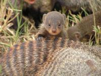 23164_web_mongoose