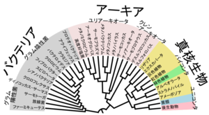800pxphylogenetic_tree_of_lifeja
