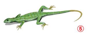 Petrolacosaurus_bw