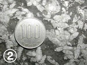 800pxfusulina091116
