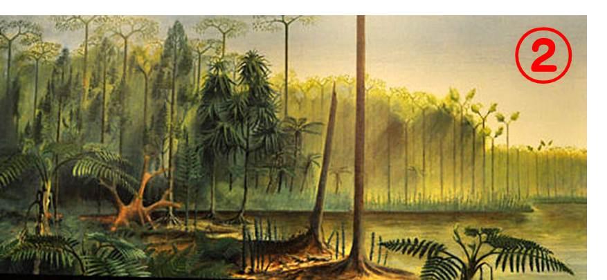 やぶにらみ生物論18: 石炭紀の生物1: 渋めのダージリンはいかが