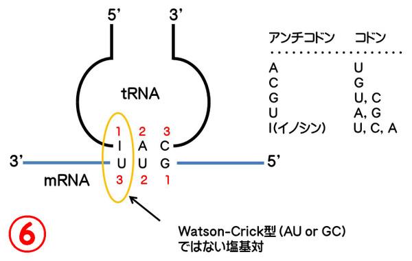 やぶにらみ生物論45: トランスファーRNA(tRNA): 渋めの ...
