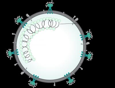 1280pxcoronavirus_virion_structuresvg