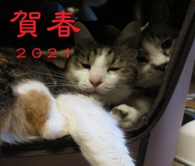Photo_20210101000401