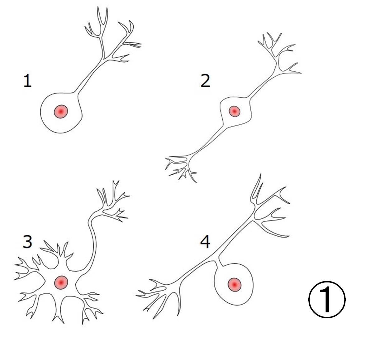 ニューロン