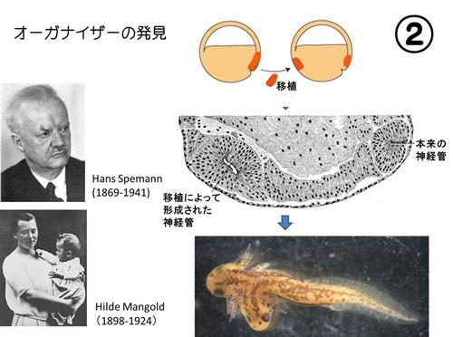 98.原腸と胚葉: Lecture